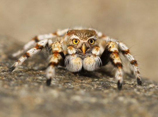 le 10 fobie più strante