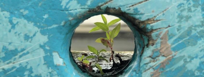 trauma e resilienza